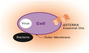 Obrázok bunky