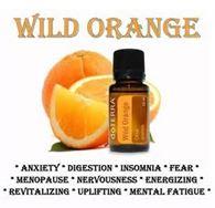 divoky pomaranc