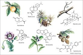 plant-metabolism